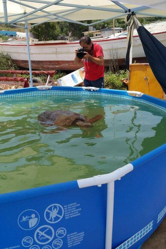 Tartaruga prelevata dal mare per fare foto e selfie for Piscina per tartarughe