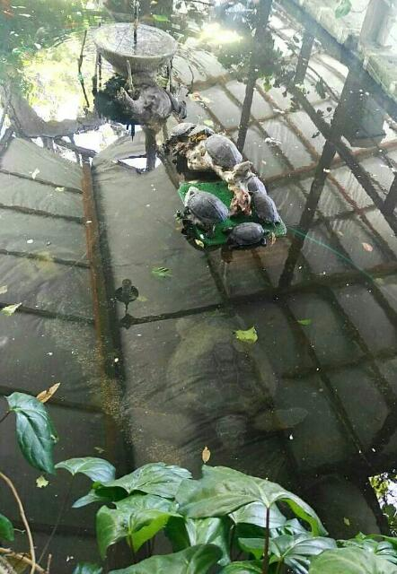 Tartaruga marina trovata in un laghetto di un agriturismo for Tartarughe nel laghetto