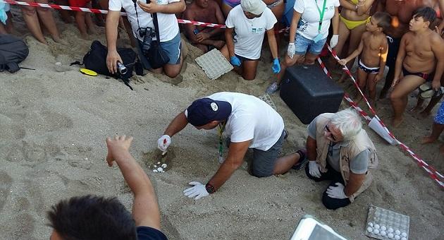 A taranto la mareggiata scopre un nido di tartaruga for Incubazione uova tartaruga