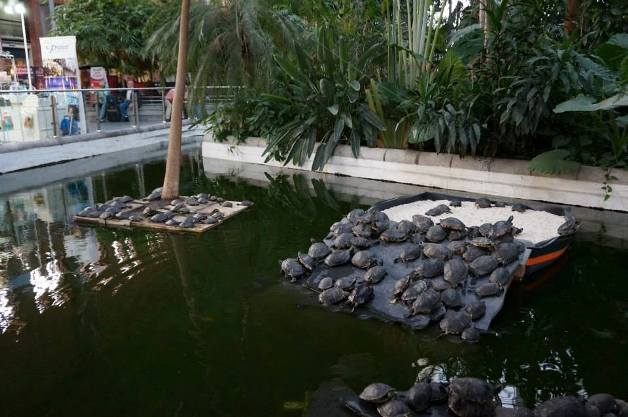 Addio alle tartarughe dalla stazione di atocha a madrid for Lago per tartarughe