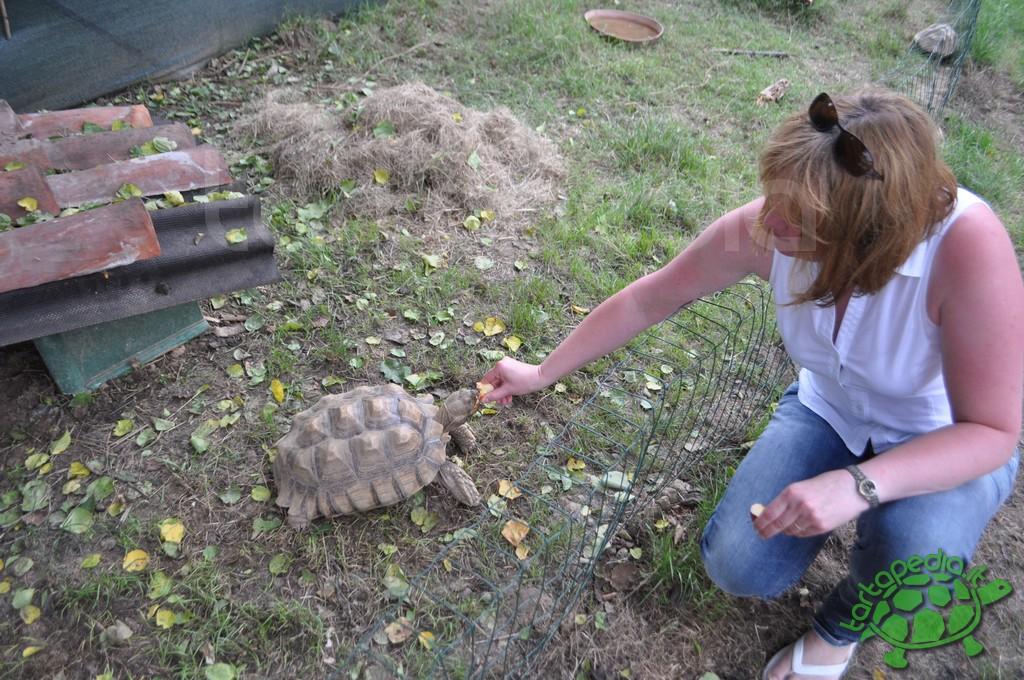 Progetto il giardino delle tartarughe tartamondo onlus for Terrario per tartarughe in giardino