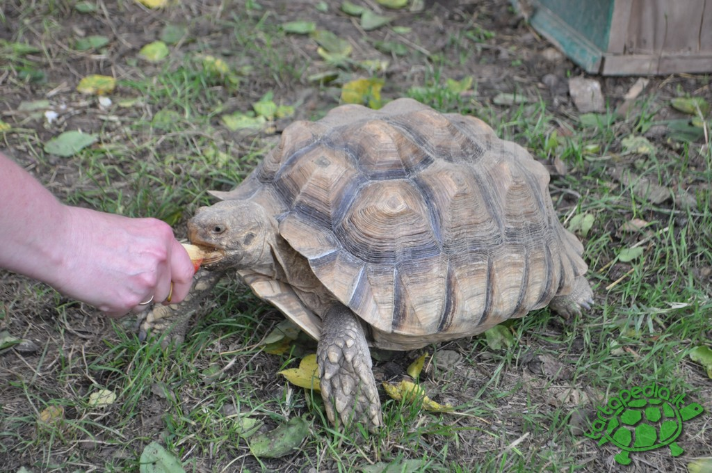 progetto il giardino delle tartarughe tartamondo onlus