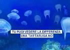 001-meduse-e-buste-tartapedia