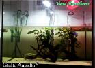 006-vasca-sternotherus-giulio-amadio