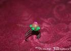 1-anellotartaruga