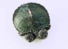5-tartaruga-a-due-teste-cina