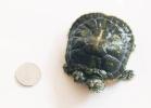 9-tartaruga-a-due-teste-cina