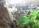 animals-bassano2013-027