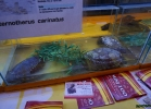 chelonian-expo-2015-035