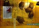 chelonian-expo-arezzo-2014-021
