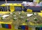 chelonian-expo-arezzo-2014-059