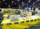 chelonian-expo-arezzo-2014-072