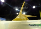 chelonian-expo-arezzo-2014-081