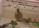 i-love-reptiles-2013-lidia-a-002