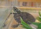 i-love-reptiles-2013-lidia-a-003