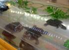 i-love-reptiles-2013-lidia-a-004