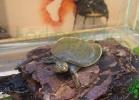 i-love-reptiles-2013-lidia-a-008
