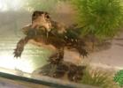 i-love-reptiles-2013-lidia-a-011