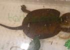 i-love-reptiles-2013-lidia-a-014