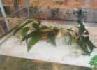 i-love-reptiles-2013-lidia-a-015