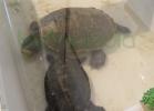 i-love-reptiles-2013-lidia-a-018
