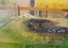 i-love-reptiles-2013-lidia-a-020