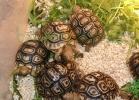 i-love-reptiles-2013-lidia-a-024