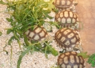 i-love-reptiles-2013-lidia-a-025