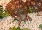 i-love-reptiles-2013-lidia-a-026