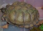 i-love-reptiles-2013-lidia-a-028