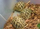 i-love-reptiles-2013-lidia-a-029