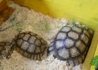 i-love-reptiles-2013-lidia-a-030