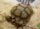 i-love-reptiles-2013-lidia-a-031
