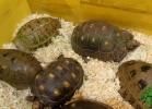i-love-reptiles-2013-lidia-a-032