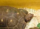 i-love-reptiles-2013-lidia-a-033