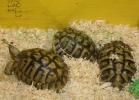 i-love-reptiles-2013-lidia-a-034