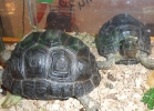 i-love-reptiles-2013-lidia-a-036