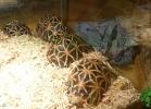 i-love-reptiles-2013-lidia-a-038