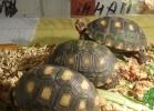 i-love-reptiles-2013-lidia-a-040