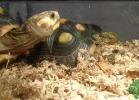 i-love-reptiles-2013-lidia-a-041