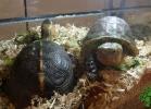 i-love-reptiles-2013-lidia-a-042