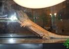 i-love-reptiles-2013-lidia-a-043