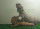 i-love-reptiles-2013-lidia-a-044