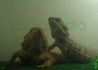 i-love-reptiles-2013-lidia-a-045