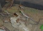 i-love-reptiles-2013-lidia-a-046