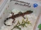 i-love-reptiles-2013-lidia-a-048