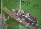i-love-reptiles-2013-lidia-a-049
