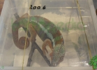i-love-reptiles-2013-lidia-a-050