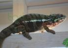 i-love-reptiles-2013-lidia-a-051