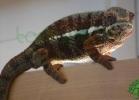 i-love-reptiles-2013-lidia-a-052